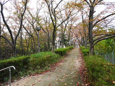 さくら公園散策道