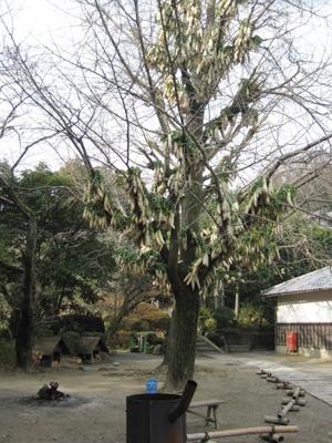円福寺の大根ツリー