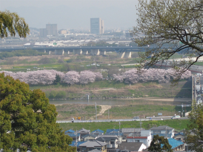 神應寺から眺めた背割堤