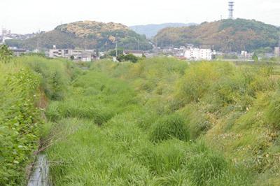 防賀川から眺める男山