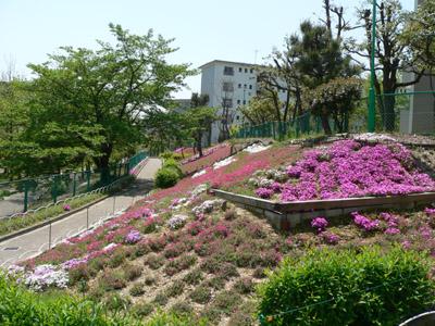第二住宅のしば桜