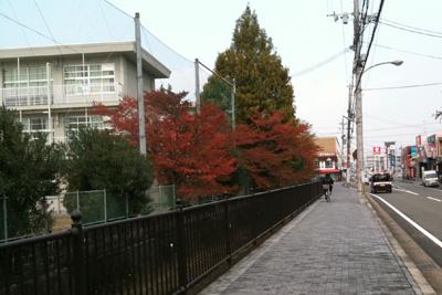八幡小学校の桜紅葉