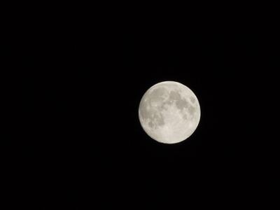 明日は中秋の名月