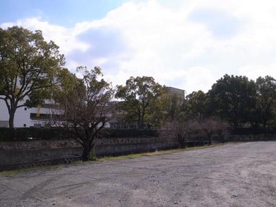 八幡市役所前の梅