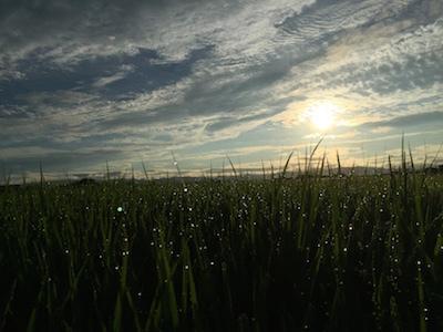 大谷川の朝空