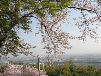 男山展望台からの眺め