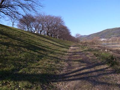 背割堤の北斜面