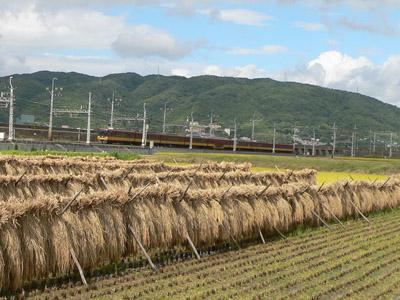 稲刈りと京阪電車